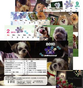 Dogd_2
